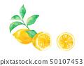 레몬과 잎 3 패턴 50107453