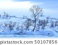 冬天太陽冬天雪表面 50107856