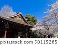 【도쿄】 야스쿠니 신사의 벚꽃 노가 쿠도 50115265