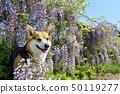 등나무 꽃과 함께 50119277