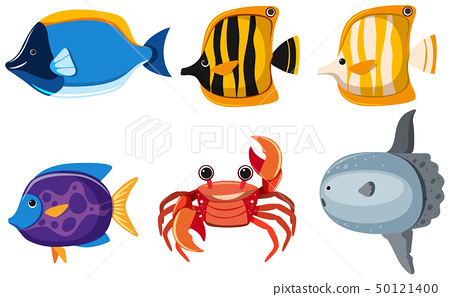 Different kinds of cute animals in the sea 50121400