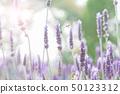 Lavender lavender field 50123312