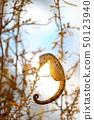 Seahorse Shooting permission · Cooperation: Aquamarine Fukushima 50123940