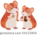 Two hamsters eating almond 50125856