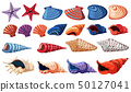 Different types of seashells on white background 50127041