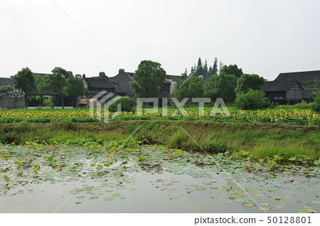 China village near the sunflower field 50128801