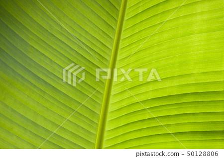 Banana leaf 50128806
