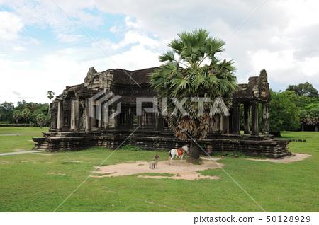 Cambodia - Angkor wat temple 50128929