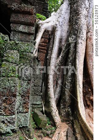 Ta Prohm temple, Angkor, Cambodia 50128973