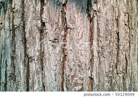 Pear tree bark 50129099