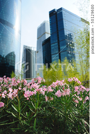 Flowers against modern building background 50129680