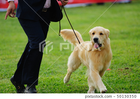 Master playing with his dog 50130350