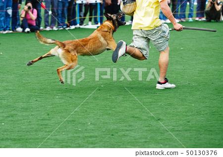 Police dog 50130376