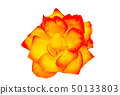 Red and yellow rose 50133803