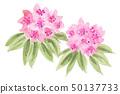 石玫瑰花19424pix7 50137733