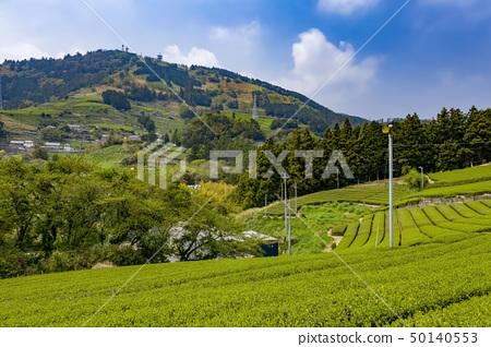 We see Mt. Ashigatake from tea plantation of Higashiyama 50140553