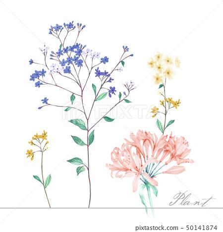 色彩柔和的水彩花卉和葉子 50141874
