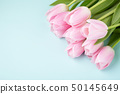 Pink tulips on blue background. 50145649