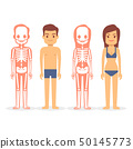Man and woman, male and female skeletons isolated on white background 50145773