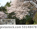 Cherry blossoms at Nagoya castle 50148478