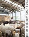羊農場的女人 50148593