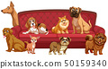Different dog breeds at sofa 50159340