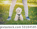 Walking with dog 50164585