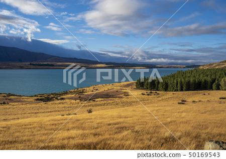 新西蘭的Great Nature Lake Tekapo 50169543