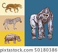 African animals. Hippopotamus Leopard Wild zebra Western gorilla.. Engraved hand drawn Vintage old 50180386
