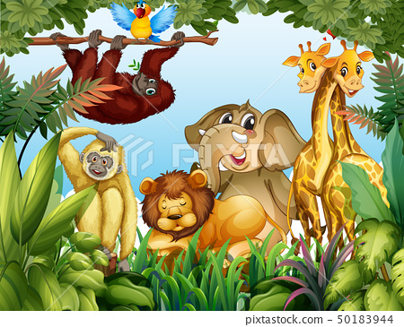 Wild animal in jungle 50183944
