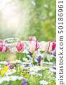 Spring flower flower bed 50186961