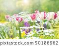 Spring flower flower bed 50186962