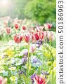 Spring flower flower bed 50186963