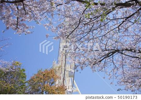 와카야마 현 난키 시라하마 어드벤처 월드 체리 관람차 50190173