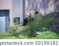 와카야마 현 난키 시라하마 어드벤처 월드의 자이언트 팬더 (영명) 50190182