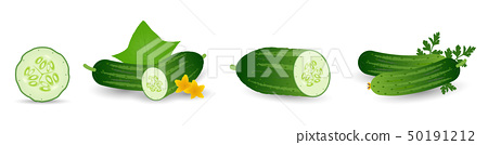 Cucumbers in cartoon style set. Whole cucumber, half, slices and cucumbers group. Fresh farm 50191212