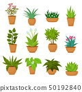 Indoor and outdoor landscape garden potted plants isolated on white. Vector set 50192840