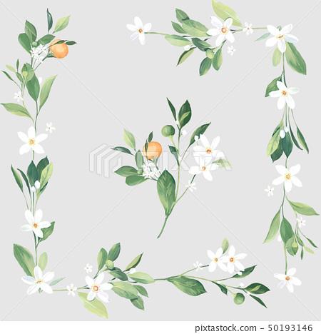 色彩清雅的水彩花和葉子 50193146