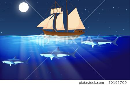 鲨鱼 海洋 海 50193709