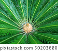 Palm Leaves Green Backdrop. Closeup Palm Tree Background 50203680