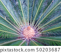 Palm Leaves Green Backdrop. Closeup Palm Tree Background 50203687