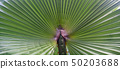 Palm Leaves Green Backdrop. Closeup Palm Tree Background 50203688