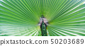 Palm Leaves Green Backdrop. Closeup Palm Tree Background 50203689