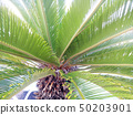 Palm Leaves Green Backdrop. Closeup Palm Tree Background 50203901