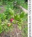 Macro Dogrose or Briar Botanical Plant Photo. Natural Outdoor. 50203919