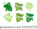 Herbal Tea with Fresh Mint Logo Templates Set. Isolated Hand Drawn Marker Painting Labels with 50204270