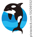 killer whale isolated 50206502
