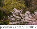 When the honeybee blossoms bloom Hachioji City Kamikawacho Imakuma Shrine 50209817