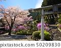 When the honeybee blossoms bloom Hachioji City Kamikawacho Imakuma Shrine 50209830
