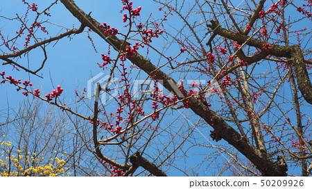 꽃나무 50209926